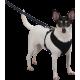 Harnais pour chien